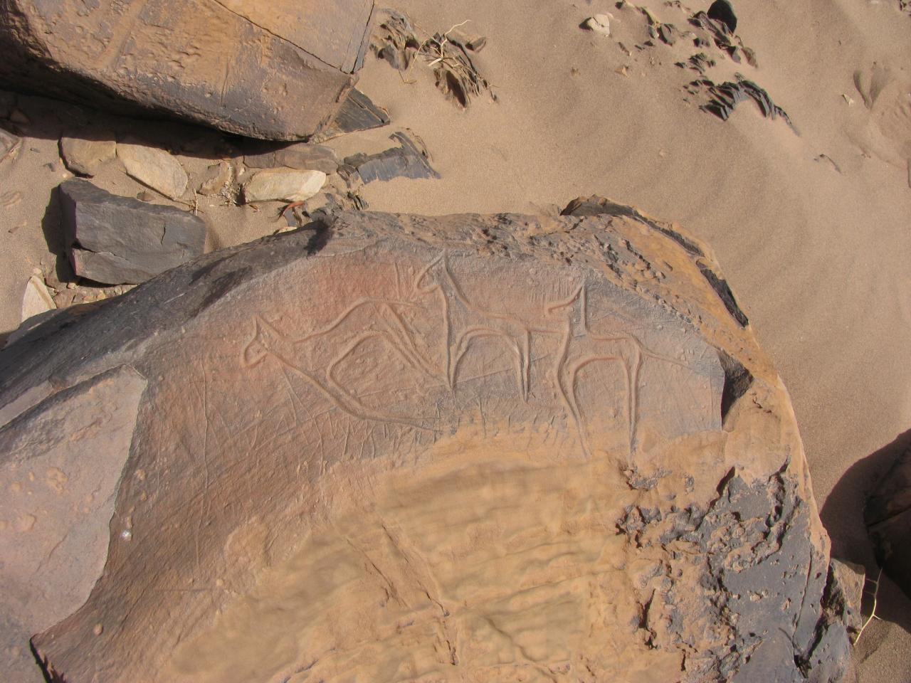 Gravures rupestres Tata Sud