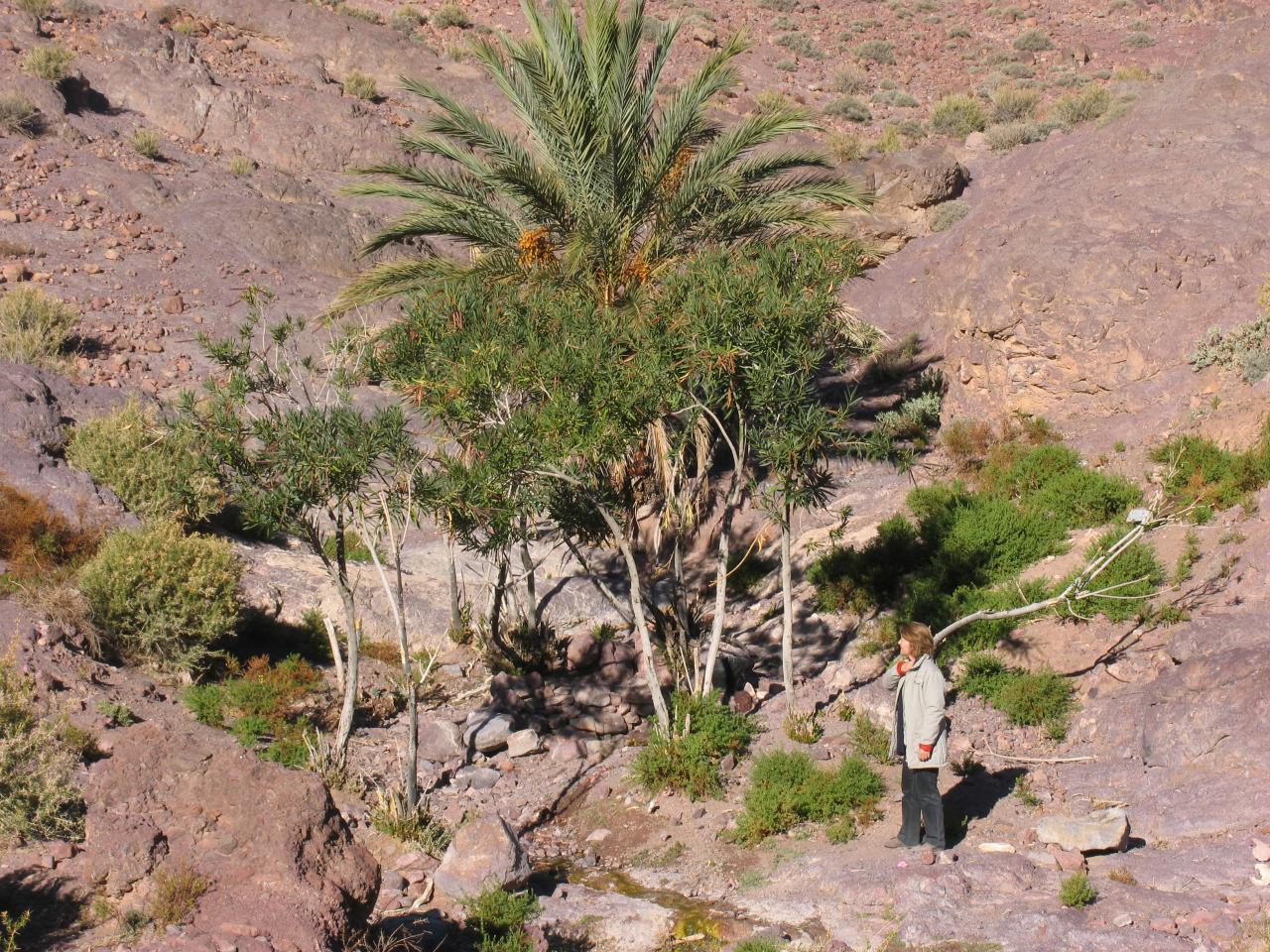 massif Sarhro (Source des bergers)